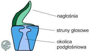 2naglosnia