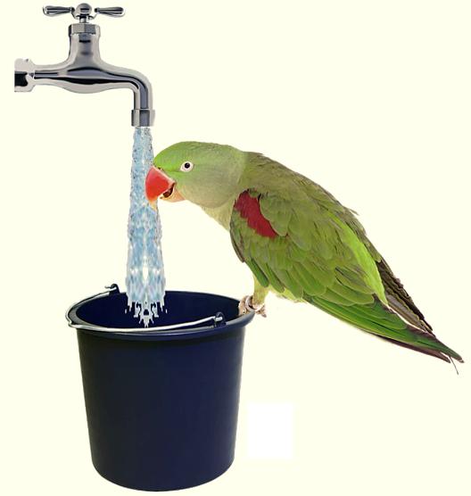 paużka pije wodę aerozoloterapia